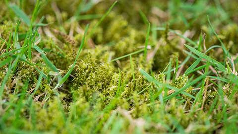 Twee stappen om mos duurzaam aan te pakken!