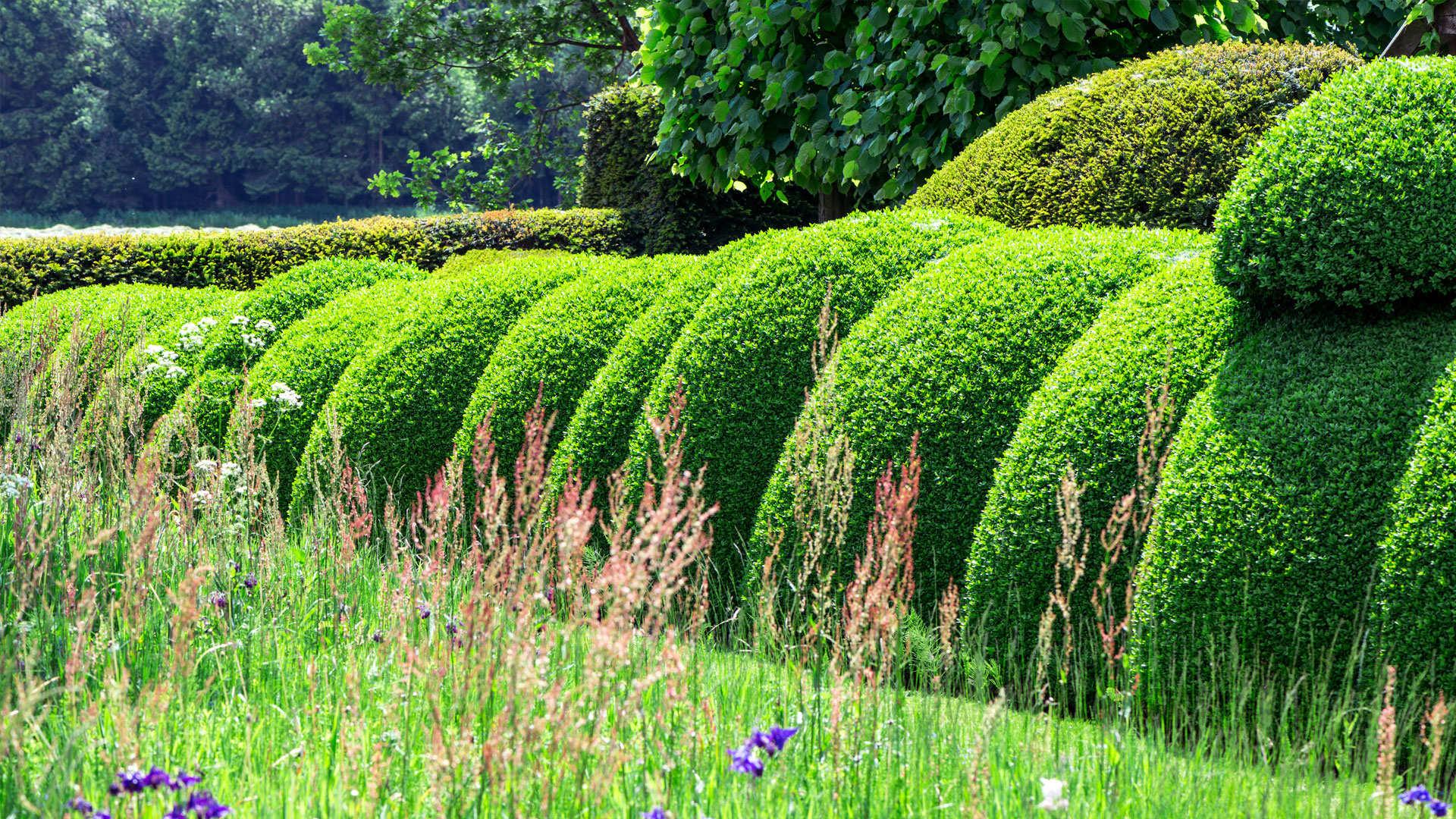 La plantation de buis en pleine terre dcm for Plantes ornement jardin