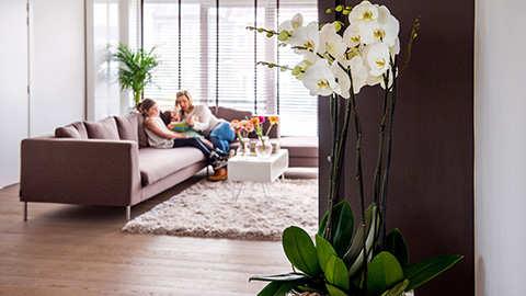 Orchideeënpracht in uw woonkamer met DCM!
