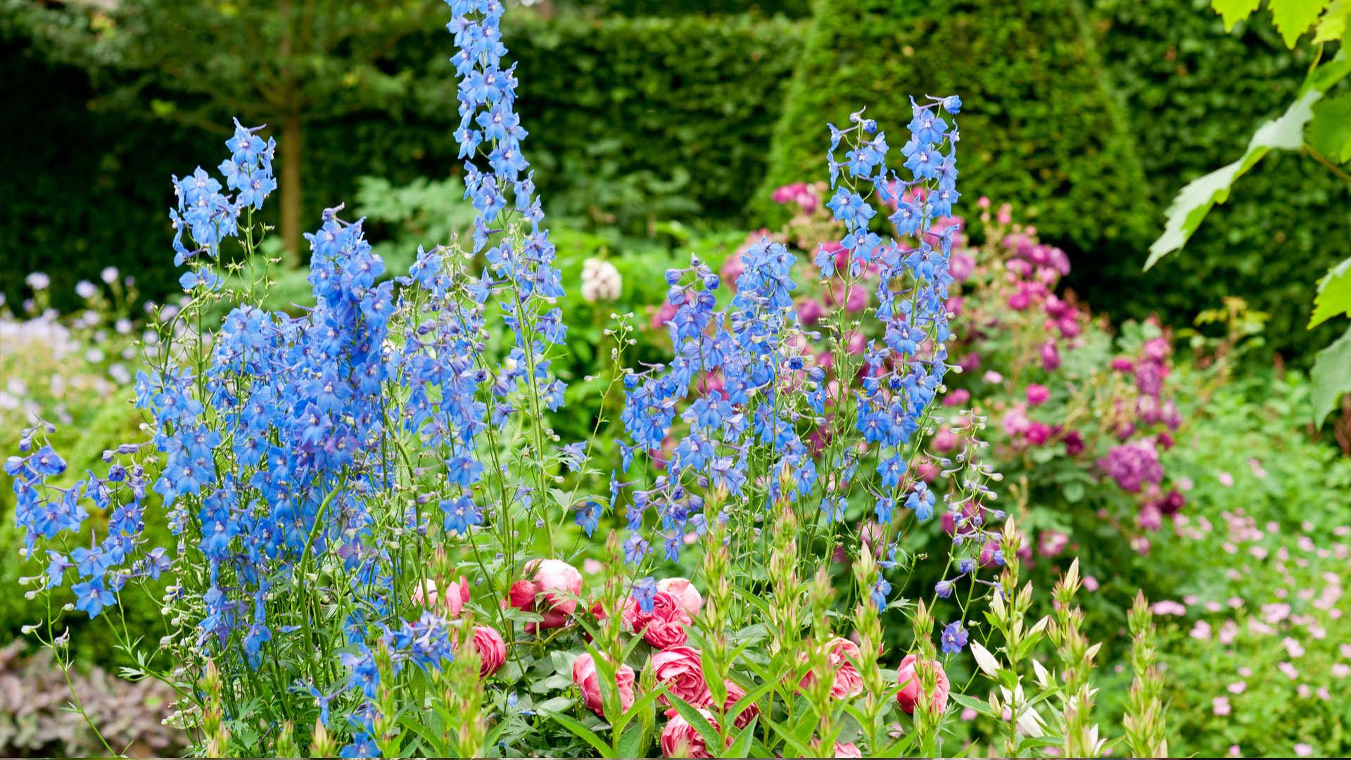 L entretien d un massif de plantes vivaces dcm for Entretien jardin bruxelles
