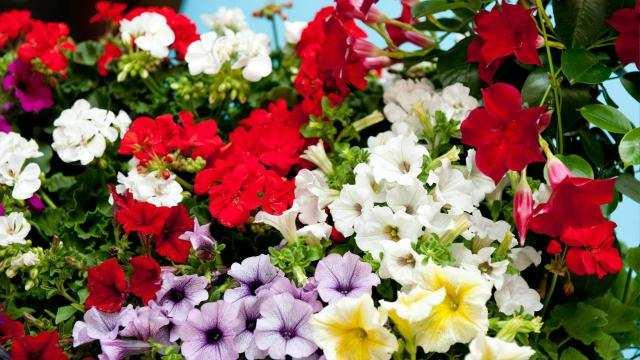 Potgronden voor gebruik in de bio-tuin: voor het allerbeste resultaat