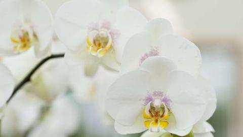 Voor elke orchidee het juiste substraat