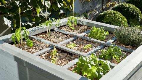 De vierkante meter tuin: bemesting en onderhoud