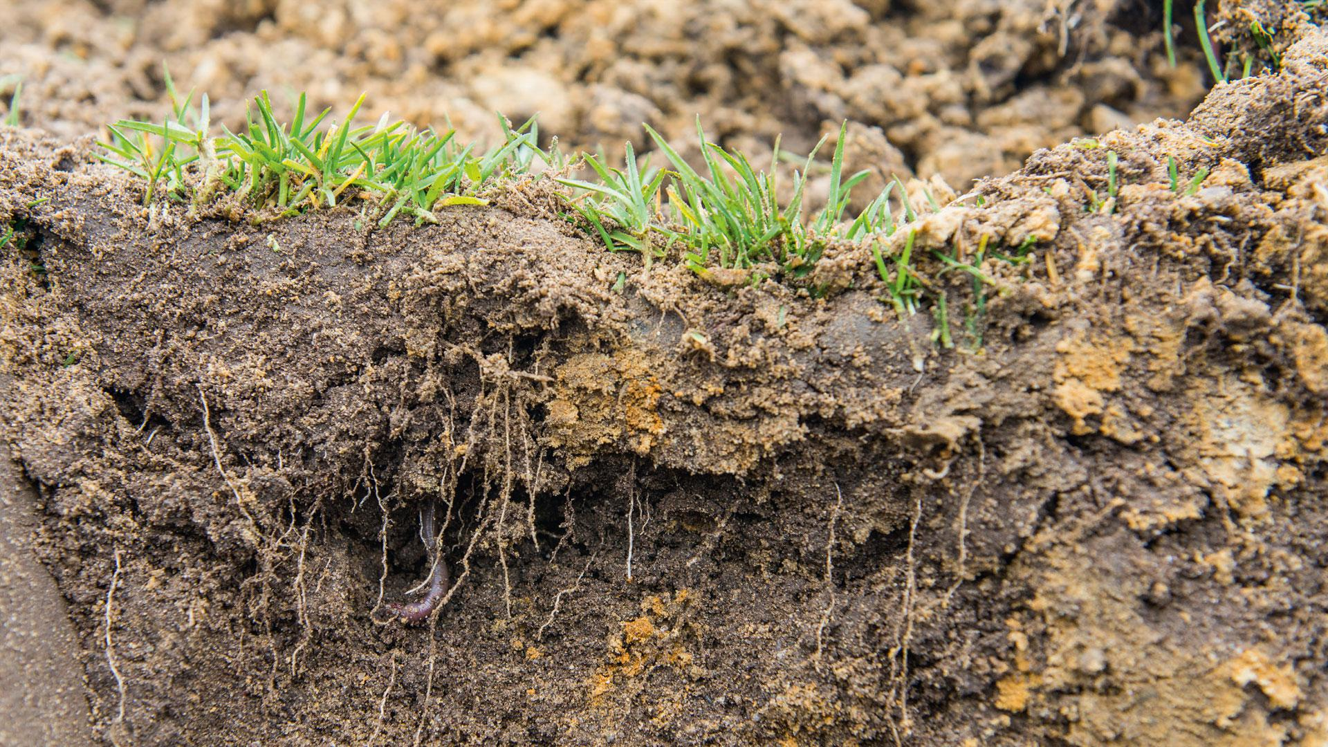 Microbial soil conditioners